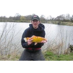 One of the rarest fish from our lakes - a Golden Tench